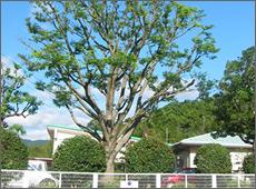 Y幼稚園樹木管理